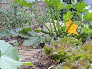dscn0472-300x225 jardin